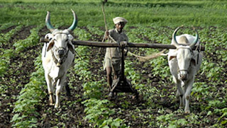 Indian Agriculture: Some Basic Facts and Food for Thought